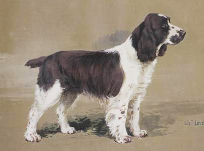 Click to see full size: A watercolour and gouache of the Springer Spaniel, �Ch. Lovebird of Solway� by Reuben Ward Binks (English, 1880-1950)