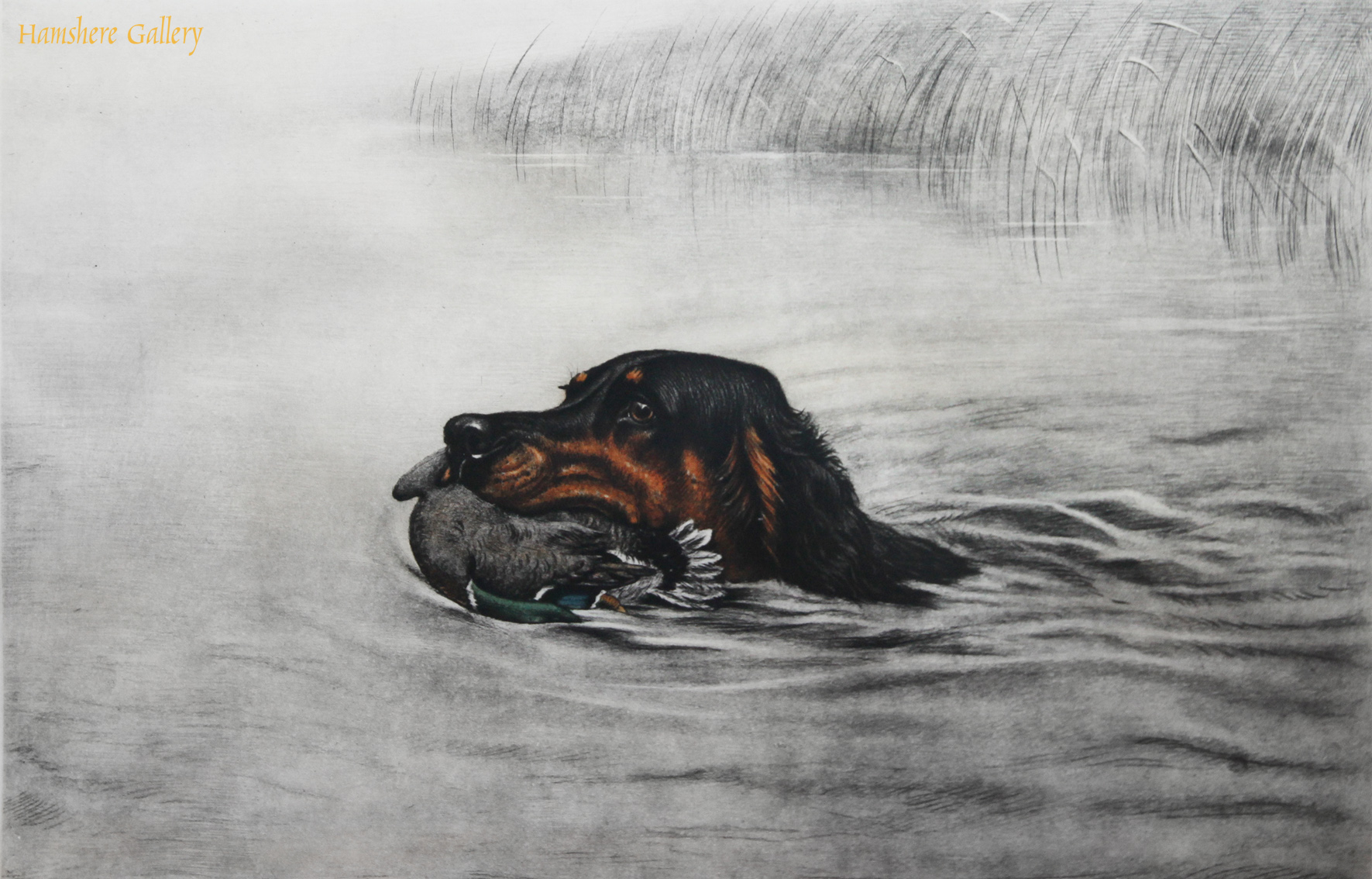 Click to see full size: Etching of a Gordon Setter swimming with Mallard by Leon Danchin (French, 1887-1939)
