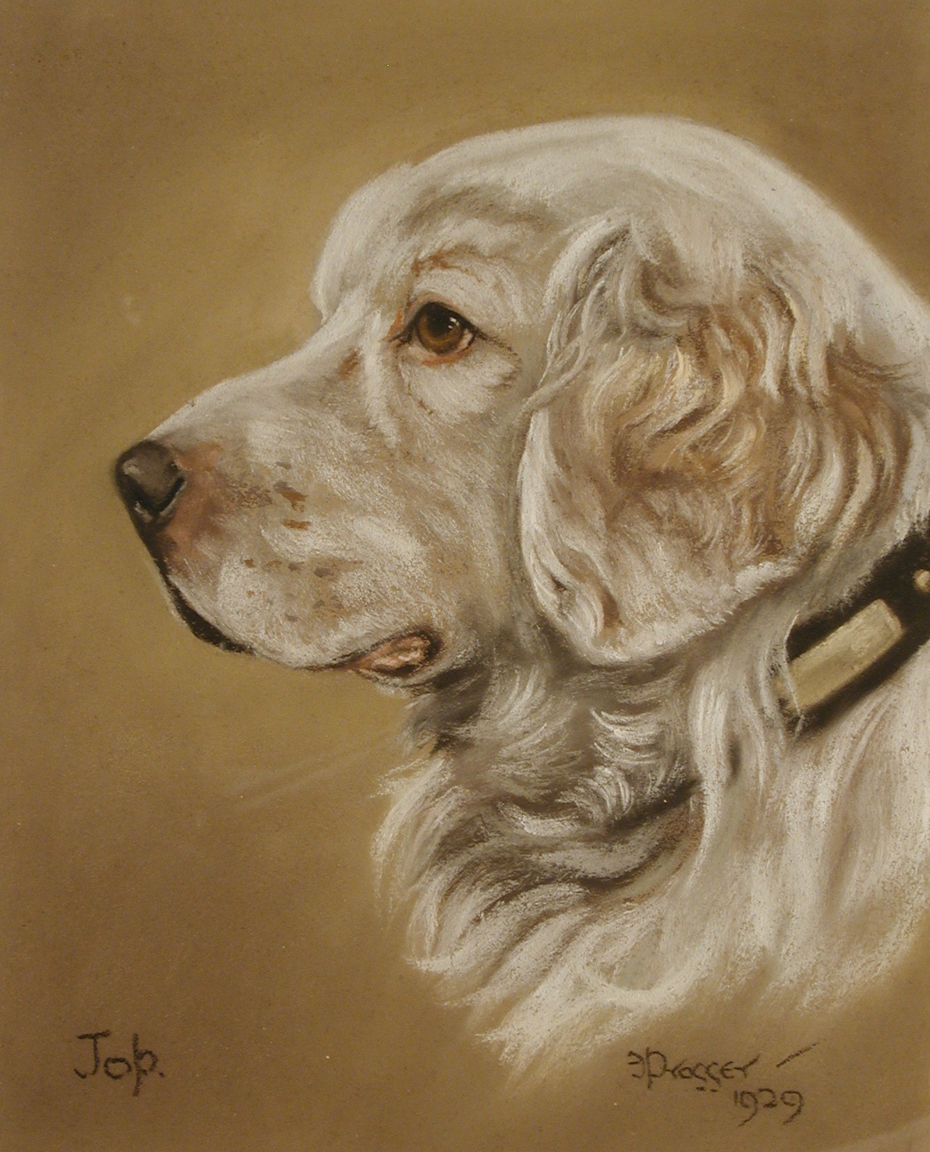 Click to see full size: Clumer Spaniel by Frank Posser- Pastel on paper of Clumber Spaniel by Frank Posser signed and dated 1929