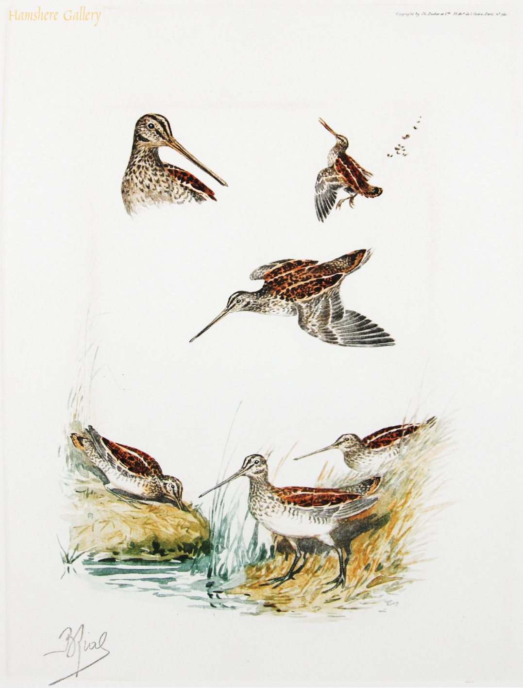 Click to see full size: Snipe studies by Boris Stefanovitch Riabouchinsky (French, 1898-1975)