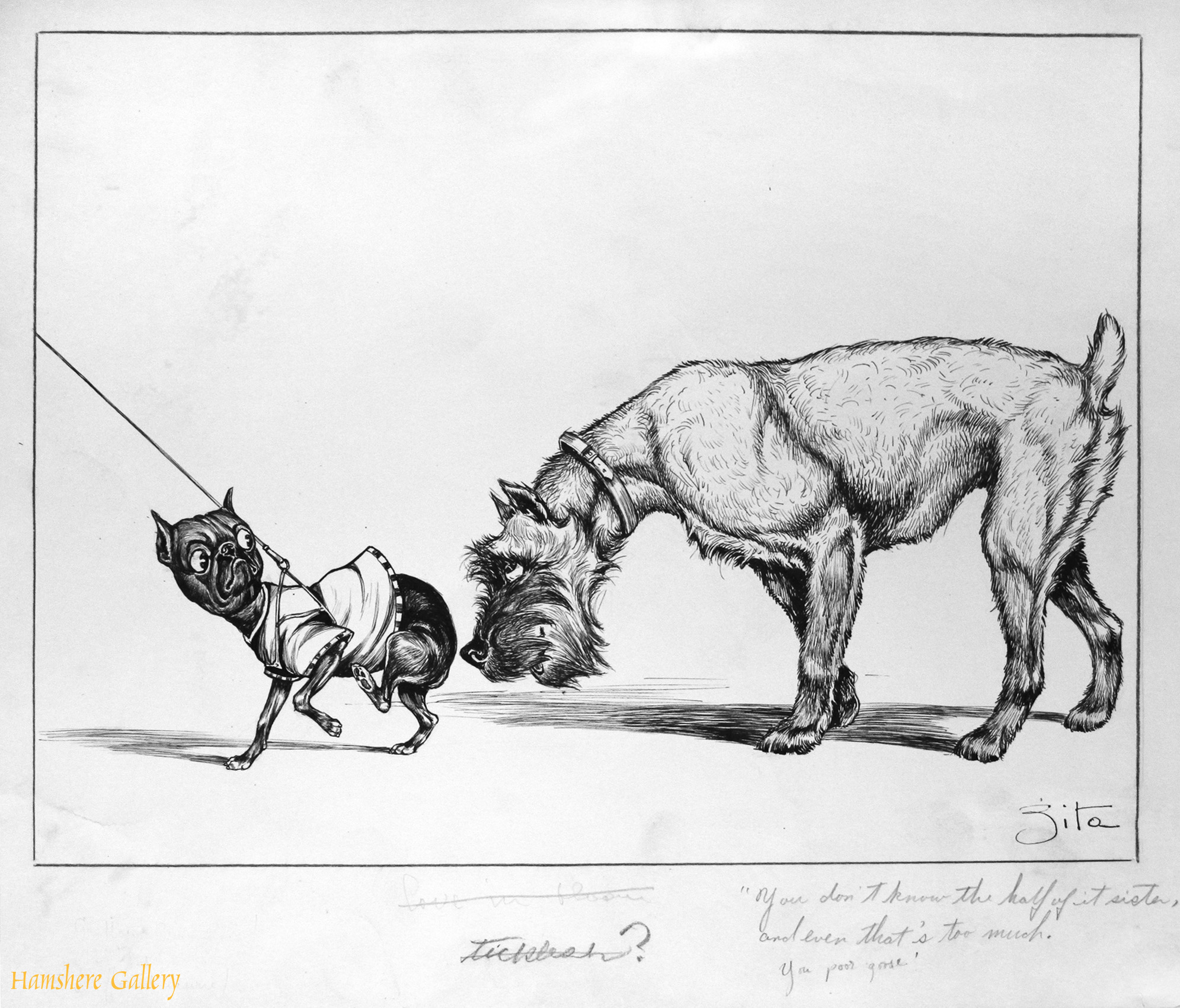 Click to see full size:   A circa 1930�s pen and ink humorous canine dog / Schnauzer cartoon drawing by Vincenzo (Vincent) Maria Zito (European/American 1900-1966)