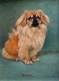 Click to see full size: The Pekingese  'Duskee of Tzumiao', seated by Miss Maud M Turner  (English, 1862 - 1947)