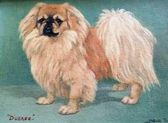 Click to see full size: The Pekingese  'Duskee of Tzumiao', standing by Miss Maud M Turner  (English, 1862 - 1947)