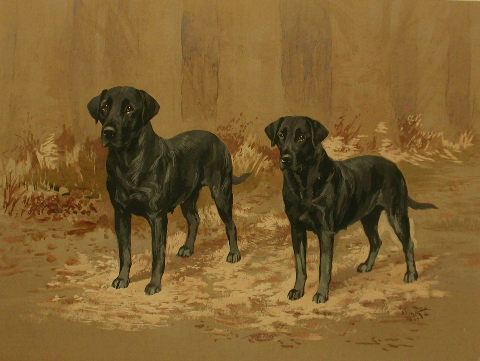 Click to see full size: Labradors by Ruben Ward Binks