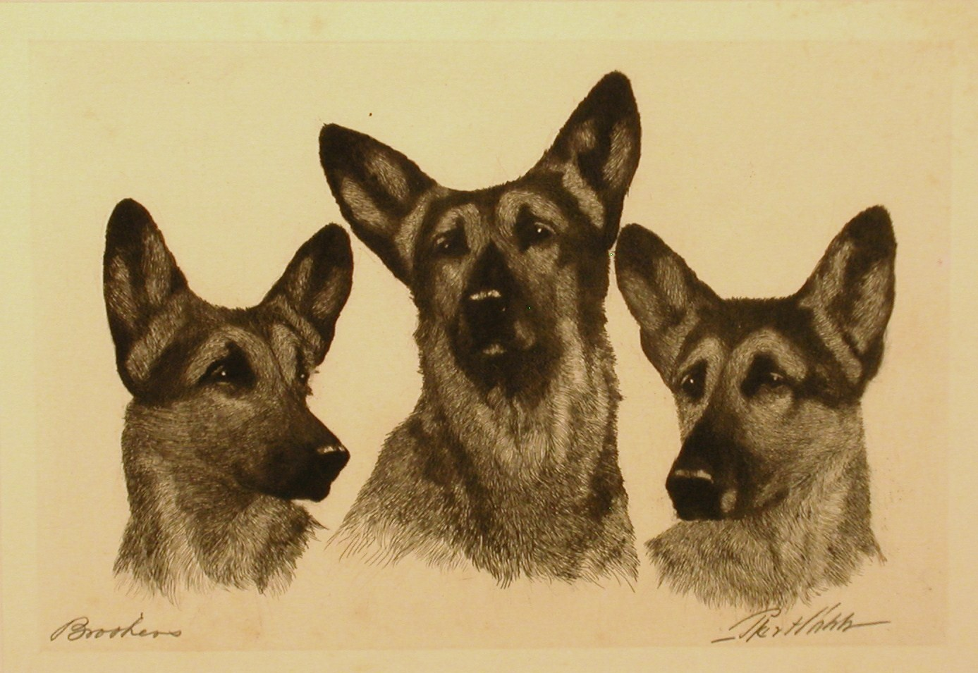 Click to see full size: German Shepherds Brookers by Bert Cobb (1869-1935)