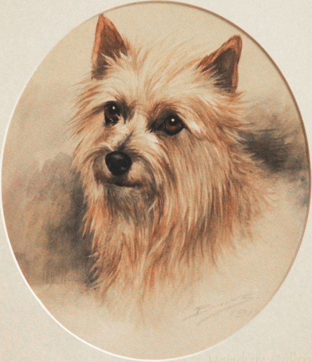 Click to see full size: ) A watercolour of a Cairn Terrier by Reuben Ward Binks (English, 1880 - 1950)