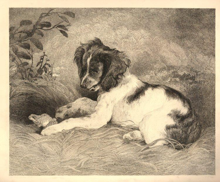 Click to see full size: Springer Spaniel puppy playing with a frog by Charles Wentworth Wass (English, 1817-1905), after Sir Edwin Henry Landseer RA (English 1802 – 1873).