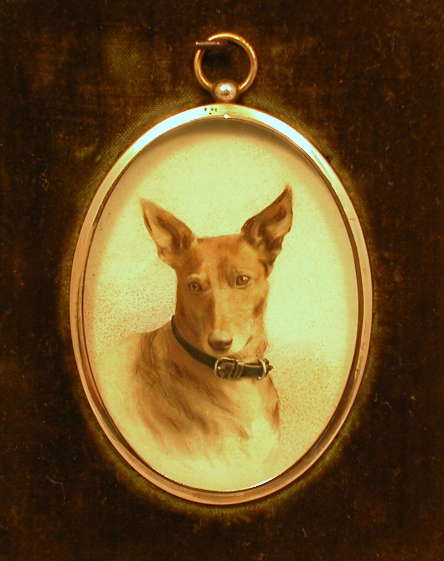 Click to see full size: Miniature Pinscher