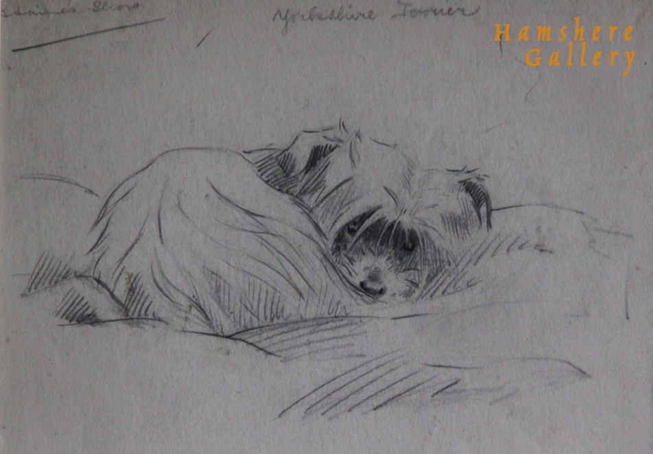 Click to see full size: Yorkshire Terrier pencil drawing by Marguerite Kirmse- Yorkshire Terrier pencil drawing by Marguerite Kirmse