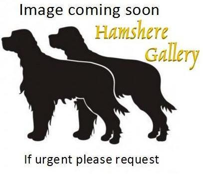 Click to see full size: Oil on board of an Irish Setter by J Clarke