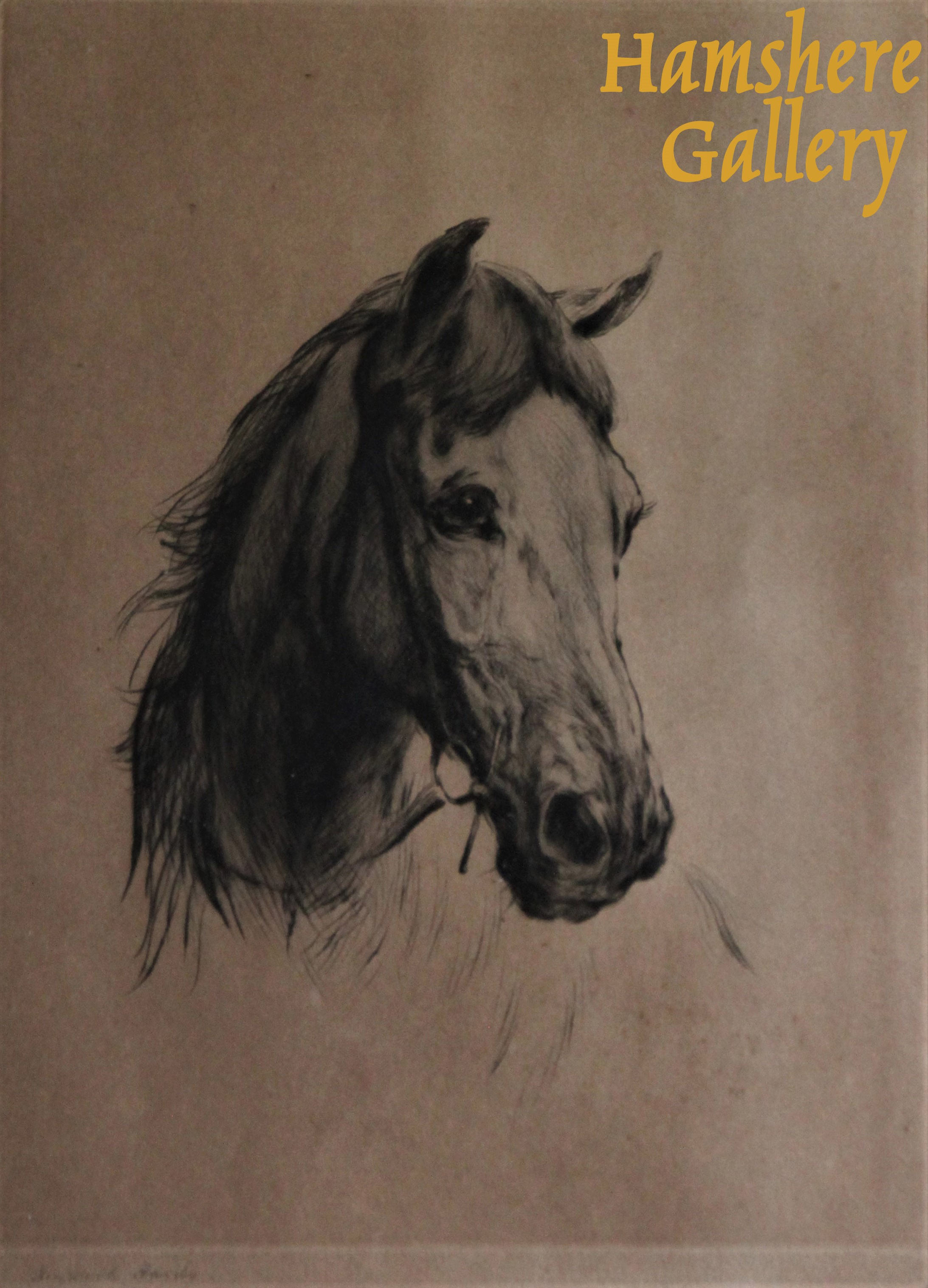 Click to see full size: Horse head etching after Heywood Hardy ARWS, RP, RE, RWA