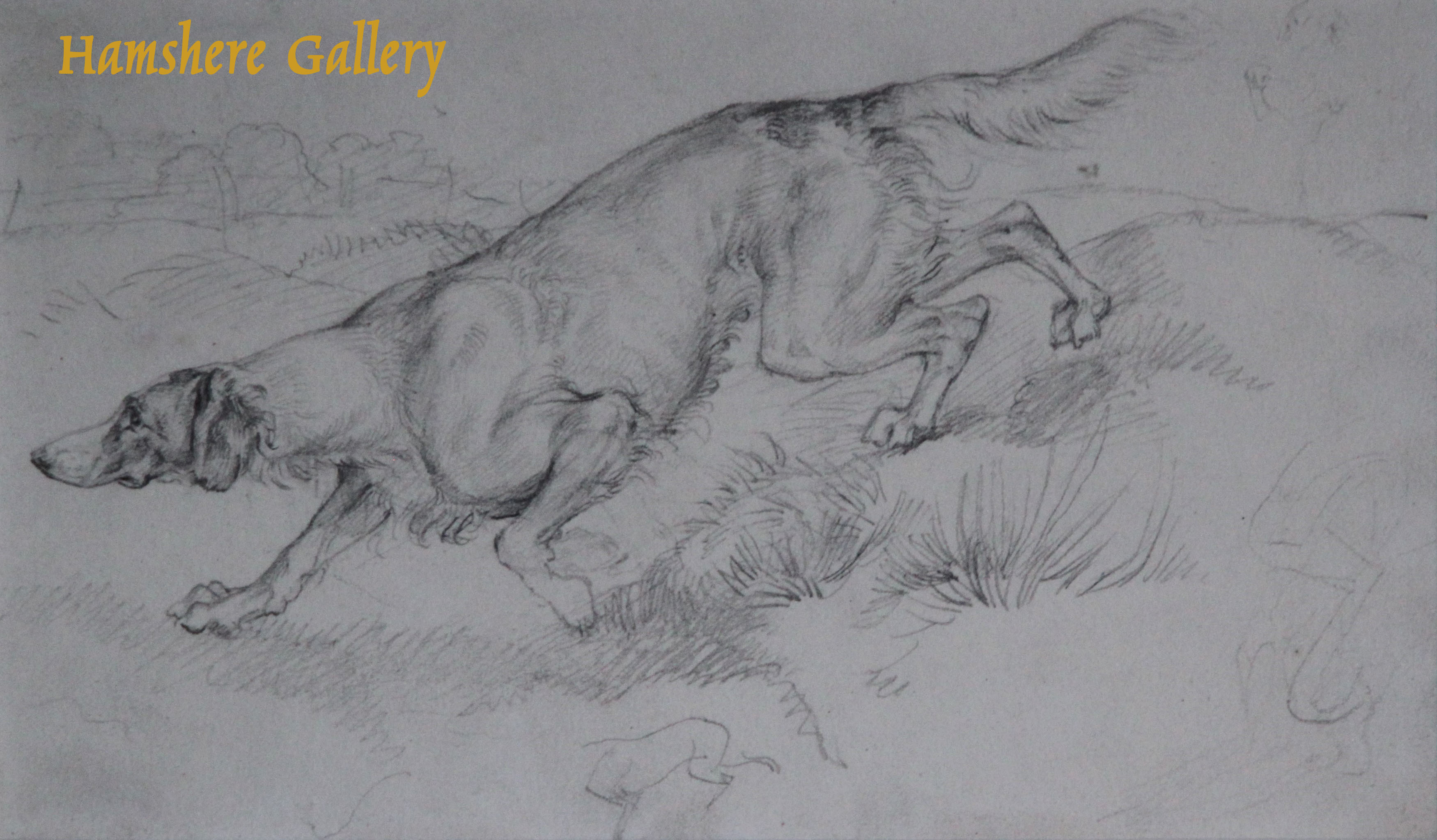 "Click to see full size: ""On the Scent"", a pencil drawing of a setter by Sir Edwin Henry Landseer R.A. (1802-1873) from 1819."