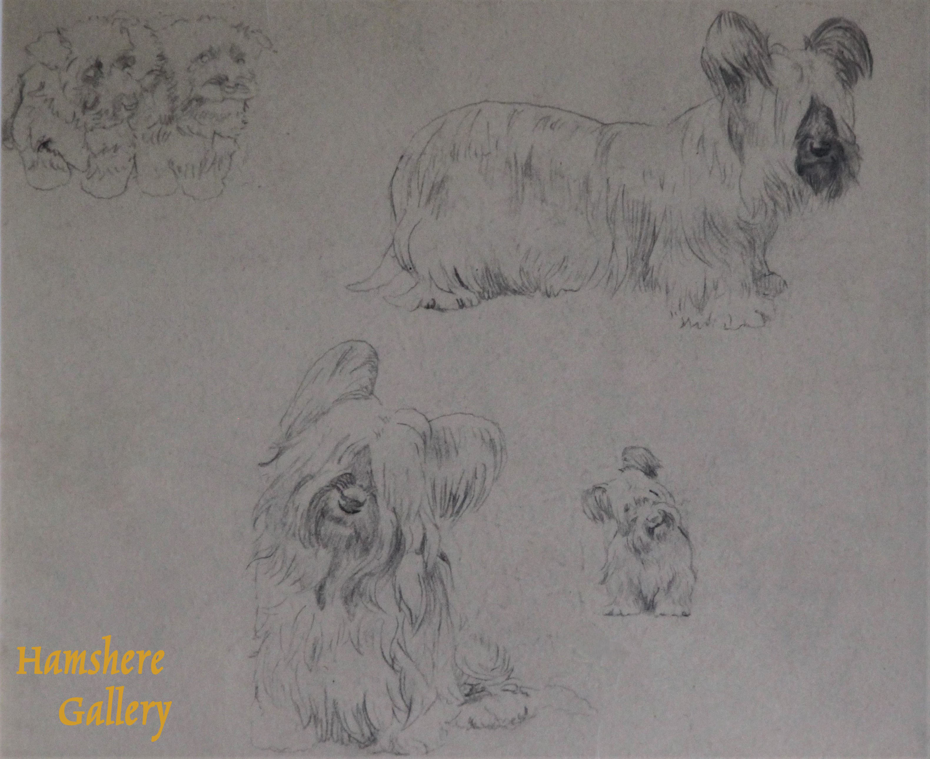Click to see full size: Skye Terrier pencil drawing studies by Marguerite Kirmse (English, 1885 -1954)