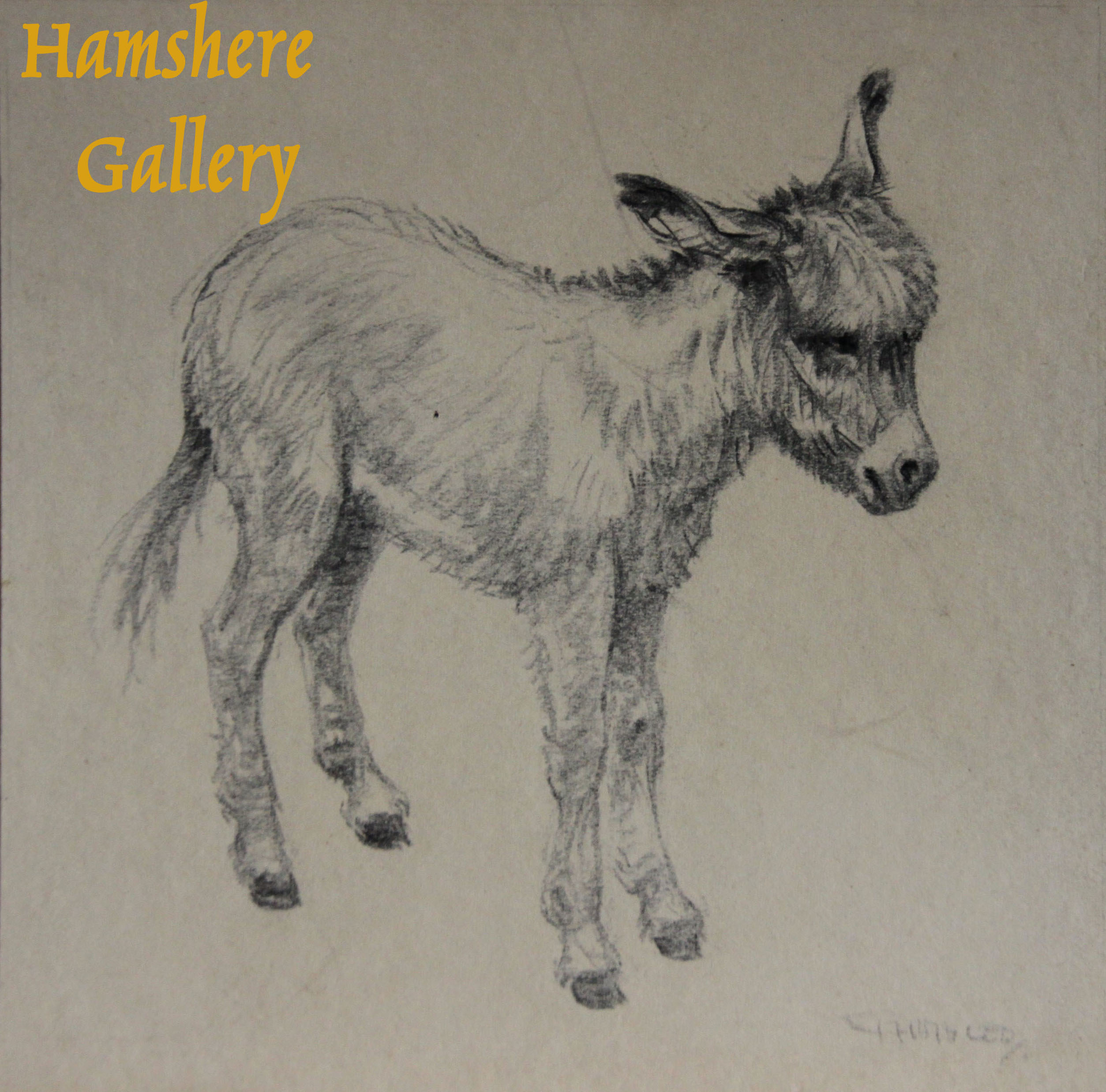 Click to see full size: A pencil drawing of a Donkey by Christopher Gifford Ambler (English, 1886-1965)