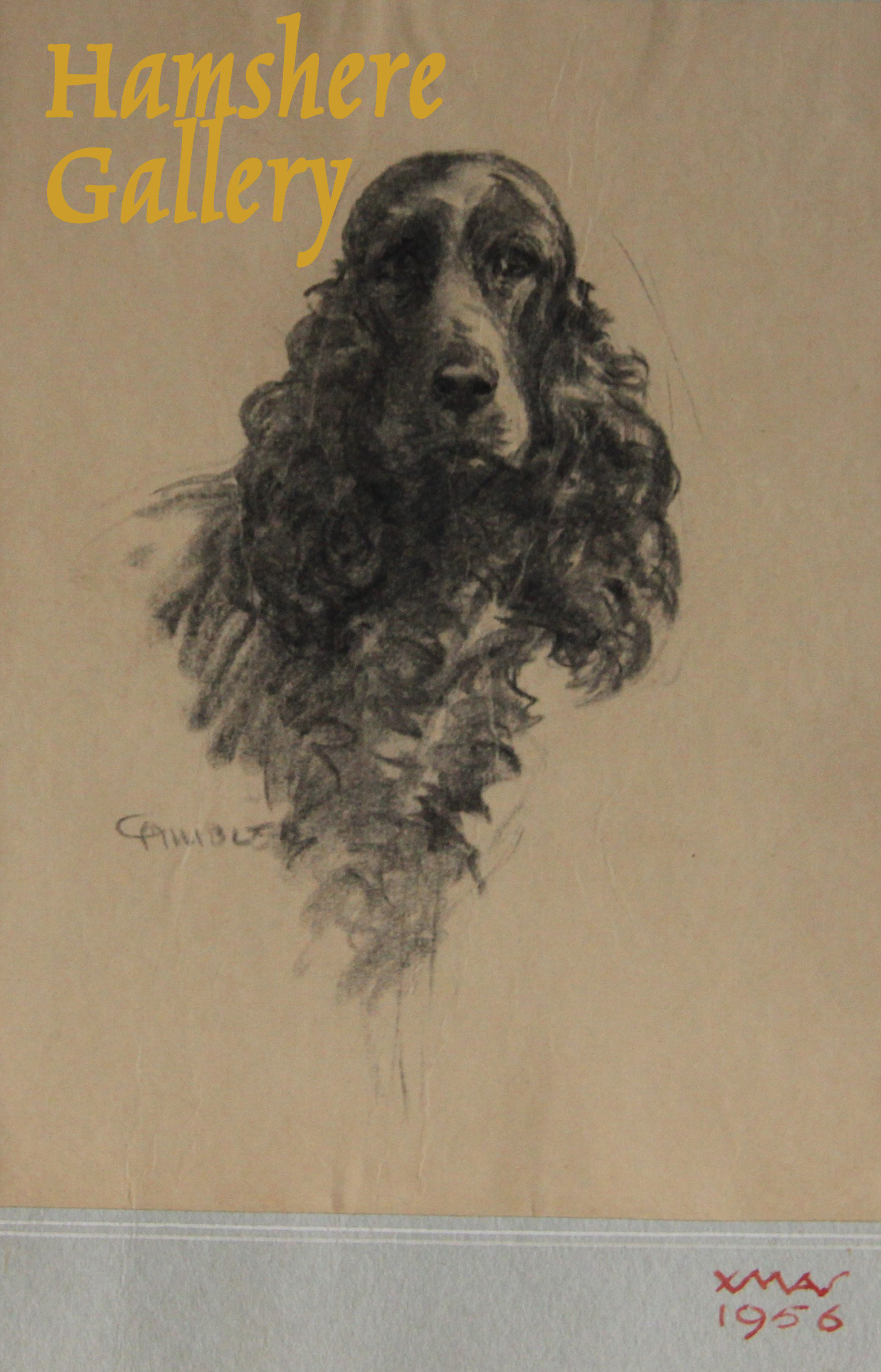 Click to see full size: A Cocker Spaniel miniature pencil drawing by Christopher Gifford Ambler (English, 1886-1965)