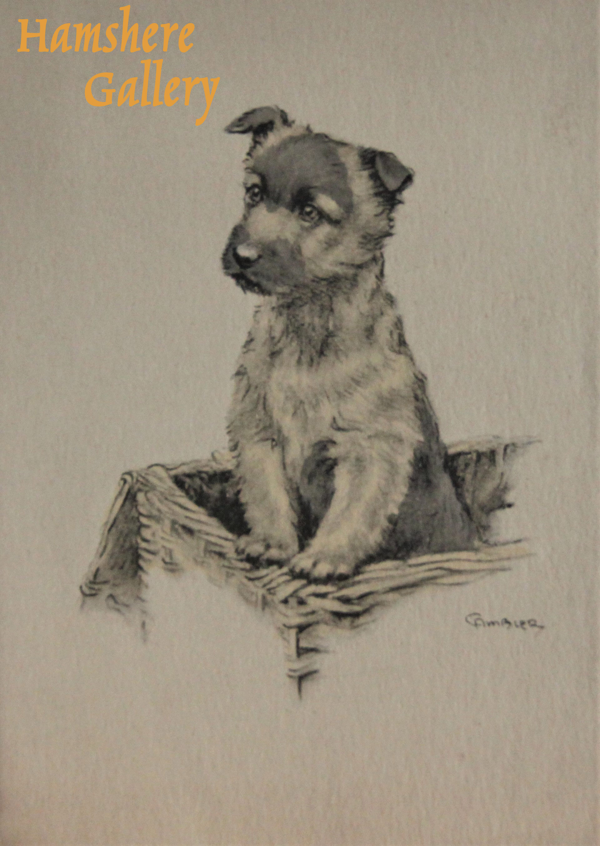 Click to see full size: A Border Terrier standing in a basket, Christmas card design by Christopher Gifford Ambler (English, 1886-1965) for Eyre & Spottiswoode