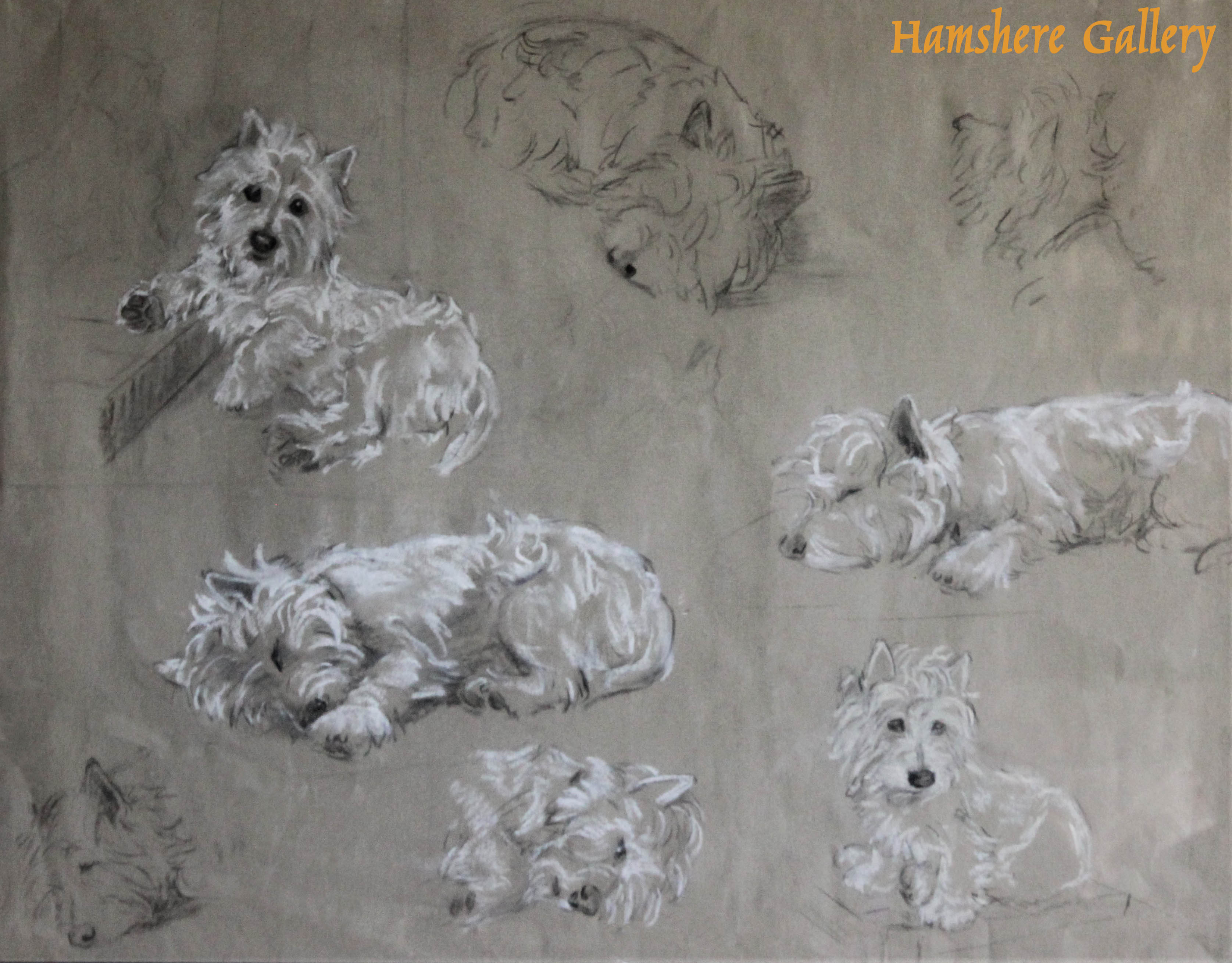 Click to see full size:  Pastel drawings of Gallant a West Highland Terrier by Miss Maud M Turner (English, 1862 - 1947)