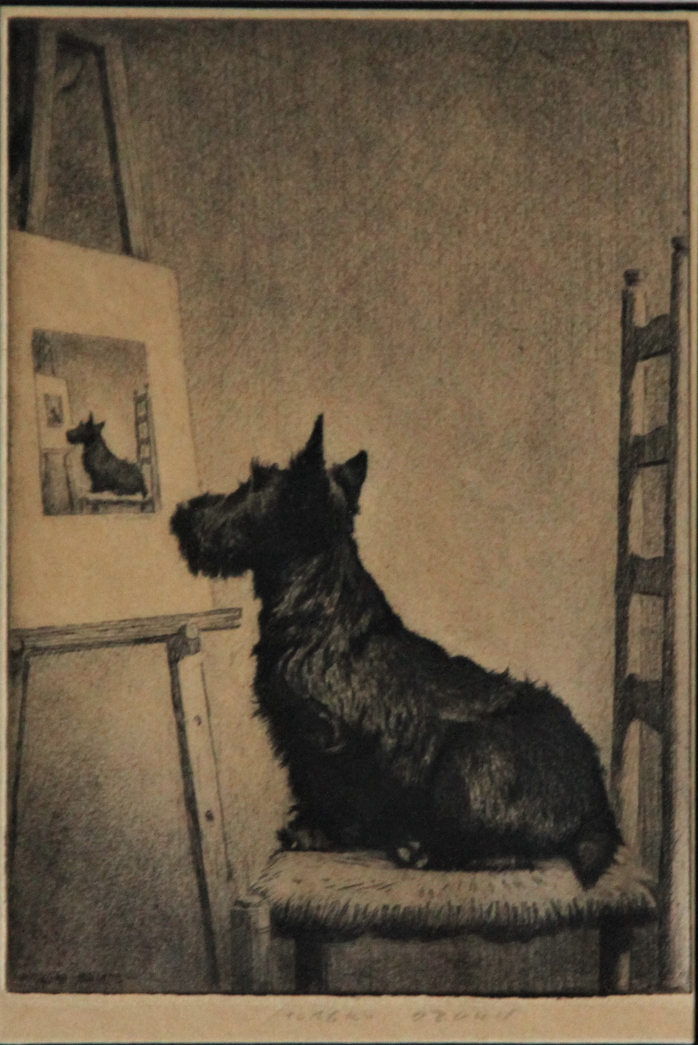 Click to see full size: Scottish Terrier,