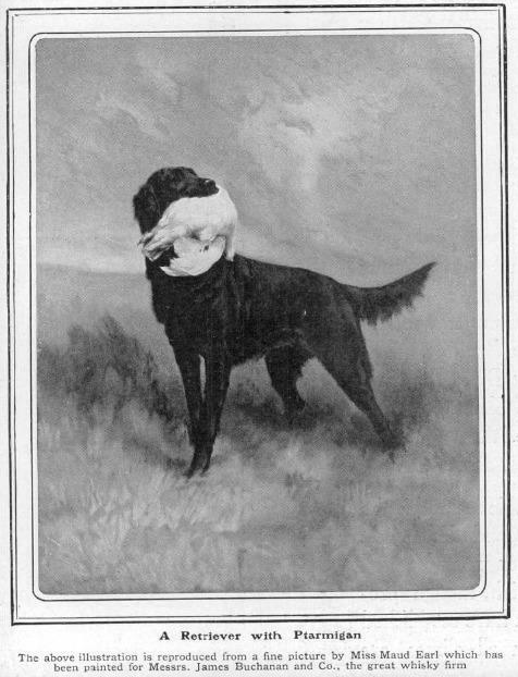 "Click to see full size: ""Flatcoat Retriever with Ptarmigan for Buchanan's Black and White Whisky by Maud Earl illustrated in ""The Sphere"" 28th September 1912- ""Flatcoat Retriever with Ptarmigan for Buchanan's Black and White Whisky by Maud Earl illustrated in ""The Sphere"" 28th September 1912
