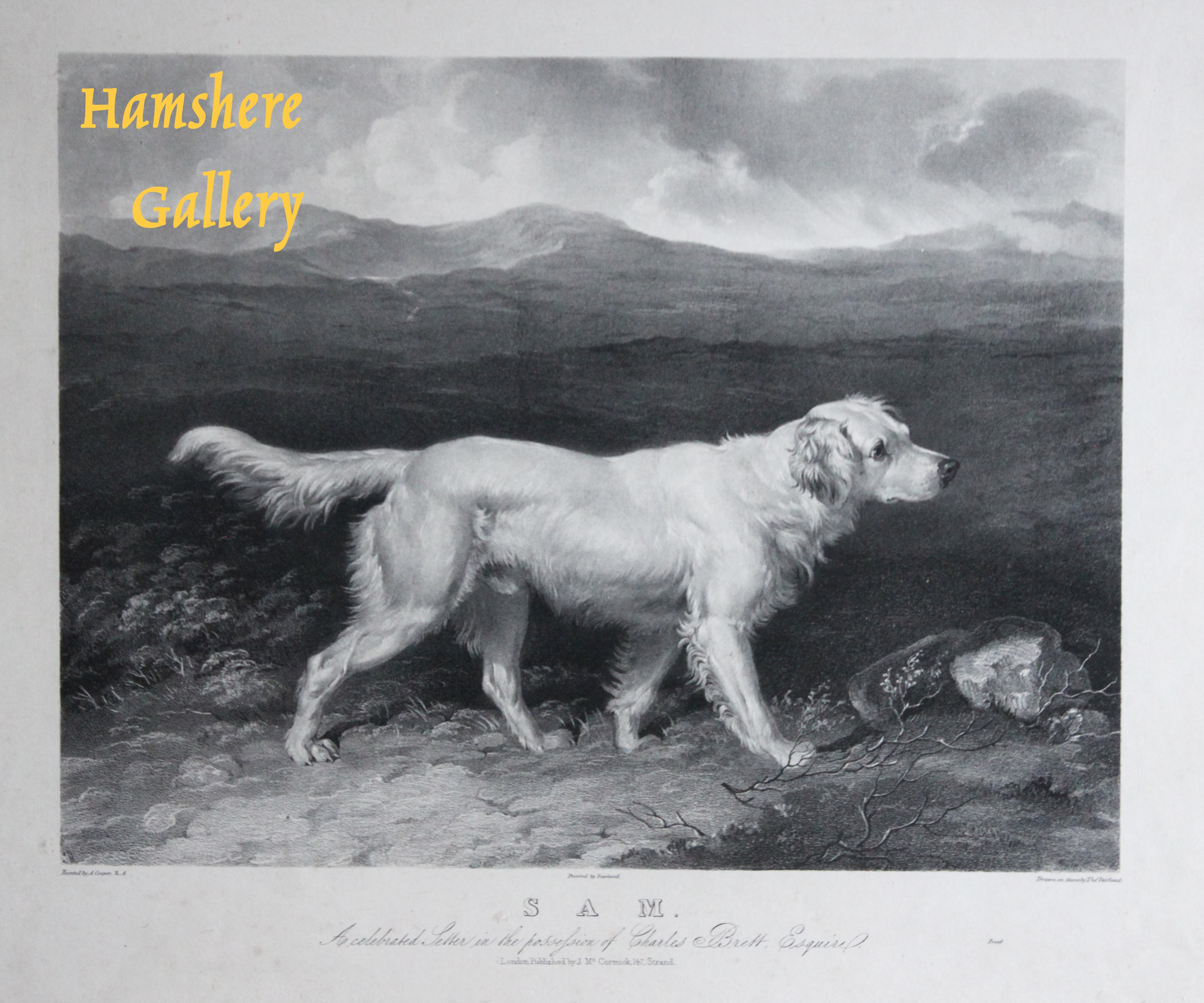 Click for larger image:  - Mezzotint of Charles Brett's White English Setter 'Sam' by Thomas Fairland (English, 1804 – 1852) after Abraham Cooper RA (English, 1787 - 1868)