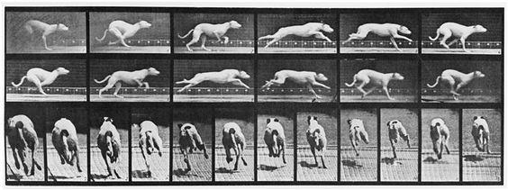Click to see full size: Greyhound photographs by Eadweard Muybridge