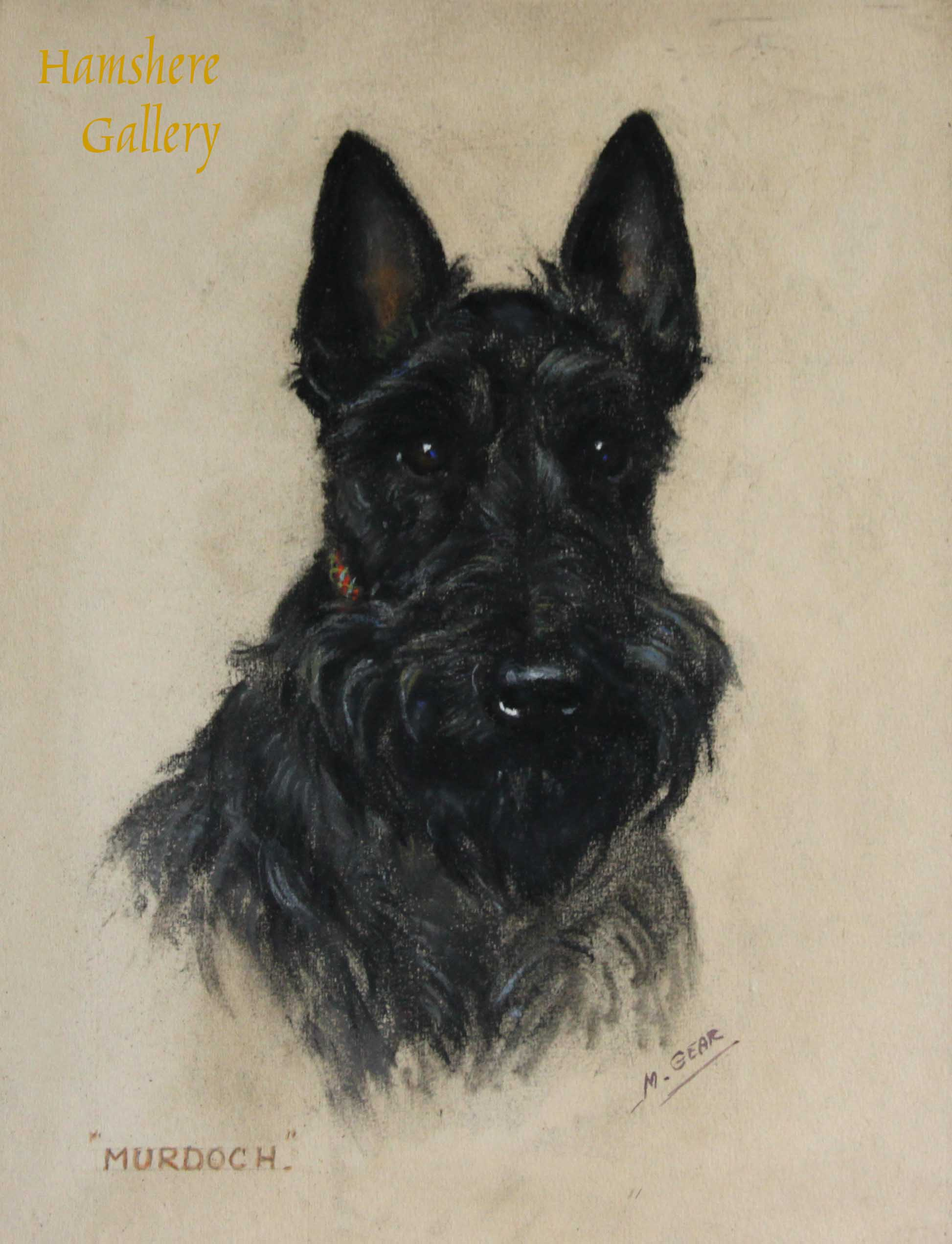 "Click to see full size: A pastel of ""Murdoch"" a Scottish Terrier puppy by Mabel Gear (English, 1898-1987)"