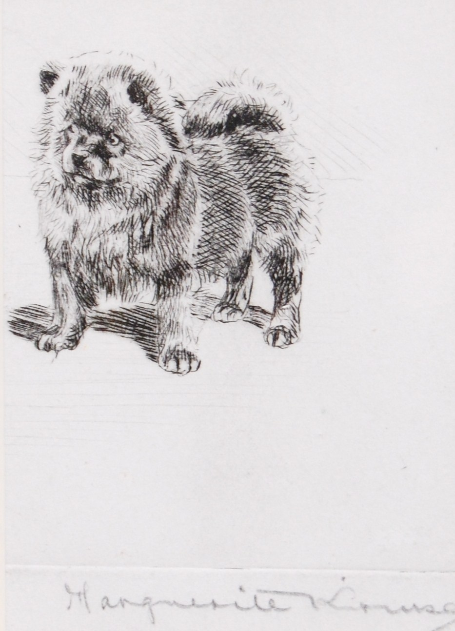 Click to see full size: Chow Chow etching by Marguerite Kirmse (1885-1955)- Chow Chow etching by Marguerite Kirmse (1885-1955)