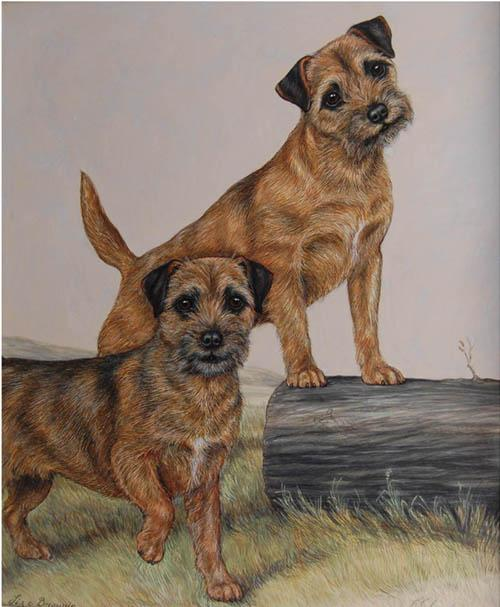 Click to see full size: Border Terrier
